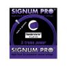 Signum Pro Thunderstorm (1.24) 12m